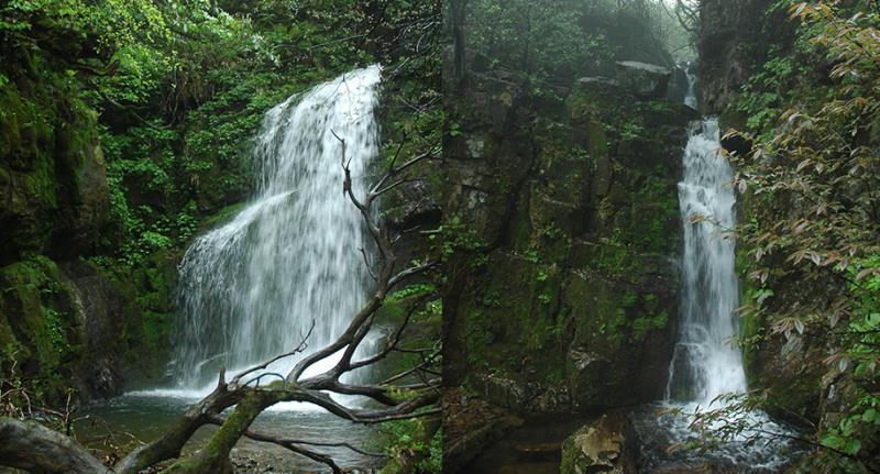 大板营原始森林位于酉阳县木叶乡境内,山上有21246多图片